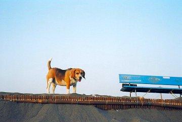 dog-bench