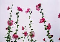 pinkflo