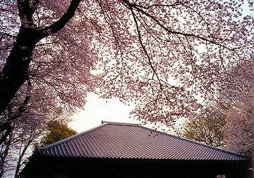 Sakura_kawara
